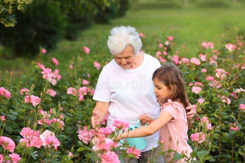 Wenig Mädchen und ihre Bewässerungsblumen der Großmutter lizenzfreies stockfoto