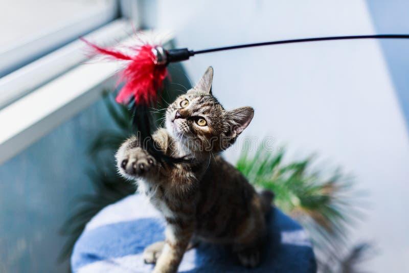 Wenig nettes flaumiges Kätzchen, das Spaß auf einem weißen Hintergrund spielt lizenzfreies stockfoto
