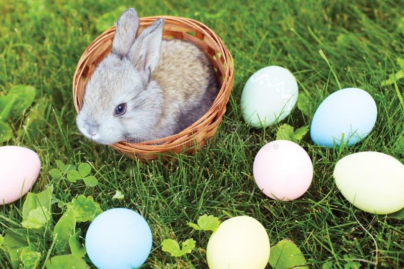 Wenig Osterhase, der in einem Weidenkorb mit Eiern sitzt lizenzfreies stockfoto