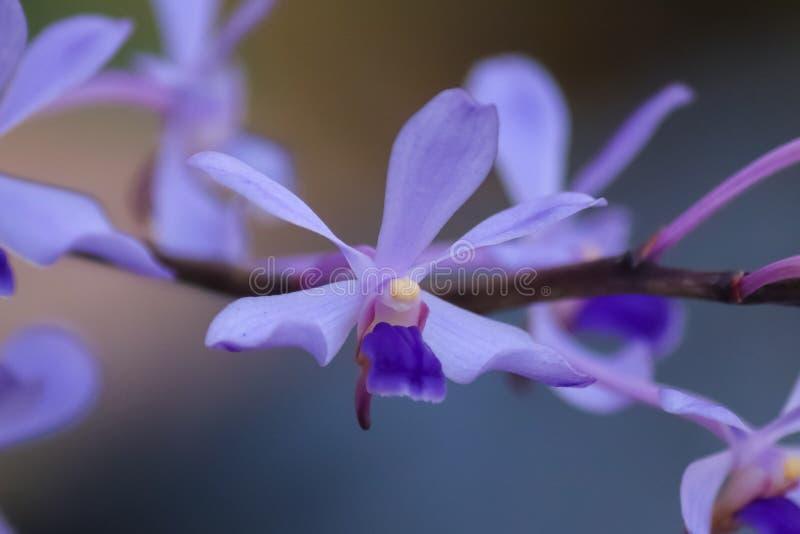 Wenig purpurrote Orchideen stockfoto