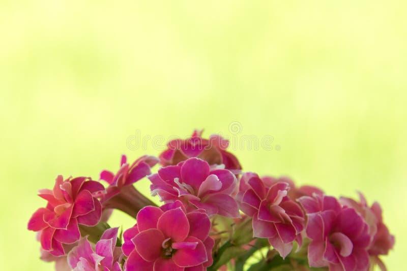Wenig rosafarbene Blume stockbilder