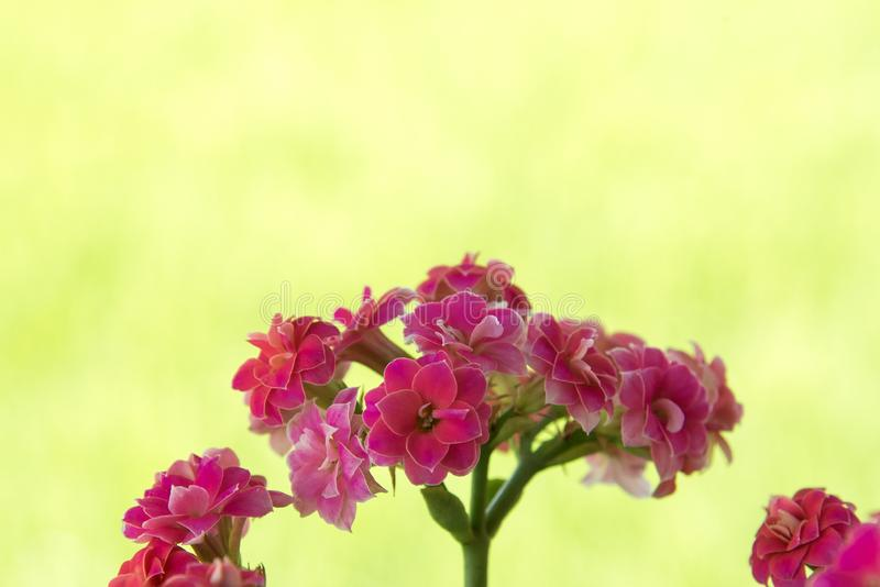 Wenig rosafarbene Blume lizenzfreie stockfotografie
