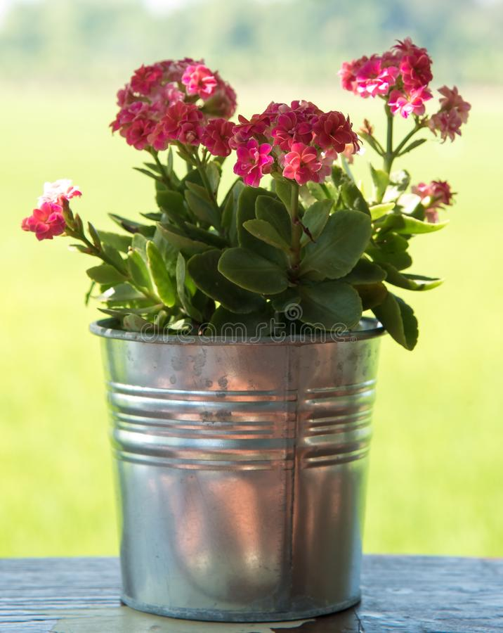 Wenig rosafarbene Blume lizenzfreie stockbilder