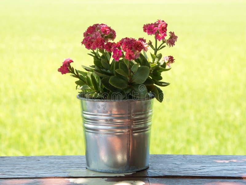 Wenig rosafarbene Blume stockbild