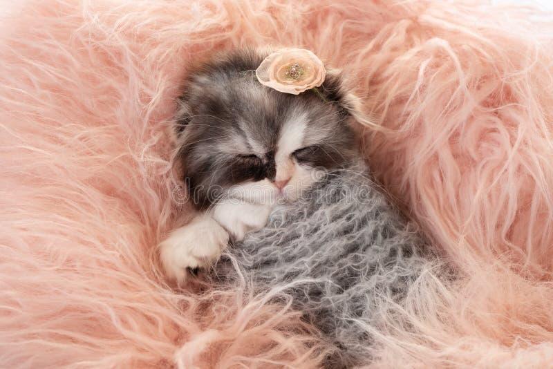 Wenig süß schlafendes Kätzchen lizenzfreies stockbild