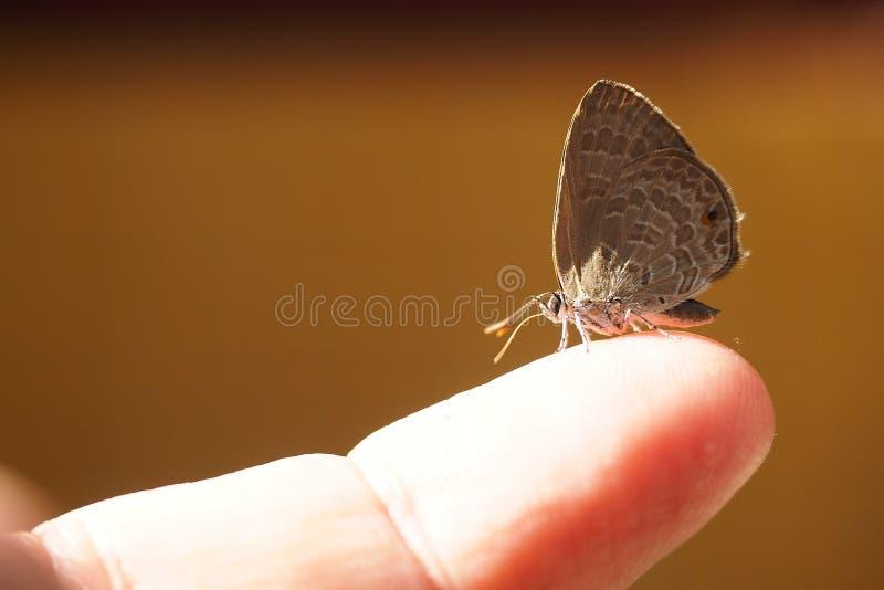 Wenig Schmetterling auf der Spitze des Fingers lizenzfreie stockfotos