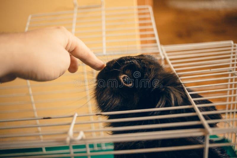 Wenig schwarze Häschenumarmung mit der Mannhand im Käfig lizenzfreie stockfotografie