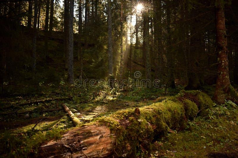Wenig Sonnenschein im Wald stockbild