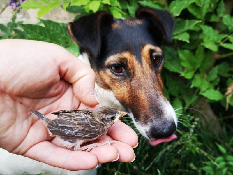 Wenig Spatzen- und Hundeaufpassen stockfoto