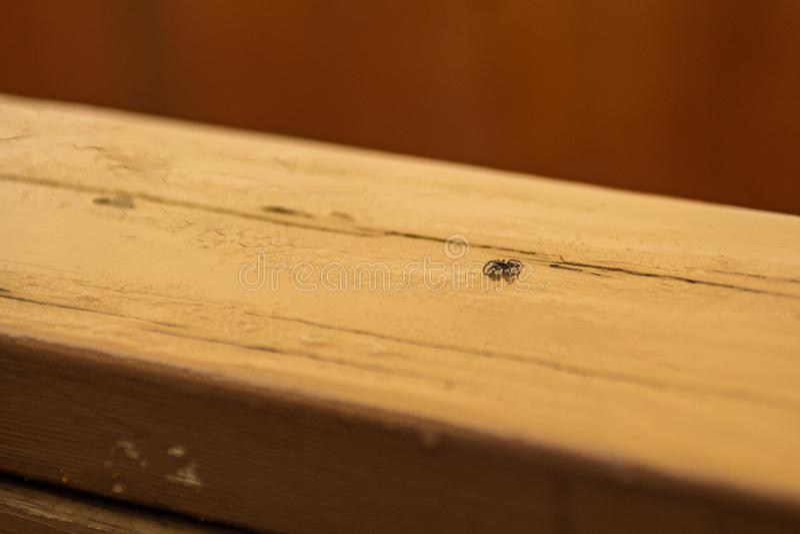Wenig springende Spinne auf einem Stück Holz stockfotografie