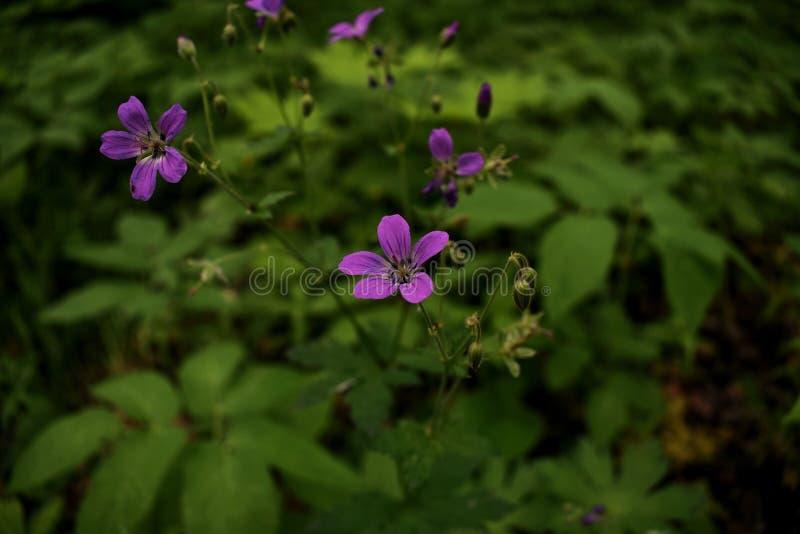 Wenig violette Blume im Wald lizenzfreie stockbilder