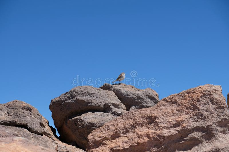 Wenig Vogel auf klarem Himmel des Felsens auf Bergspitze lizenzfreies stockbild