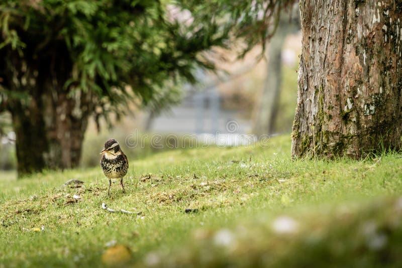 Wenig Vogel mit Bäumen und Gras stockfoto