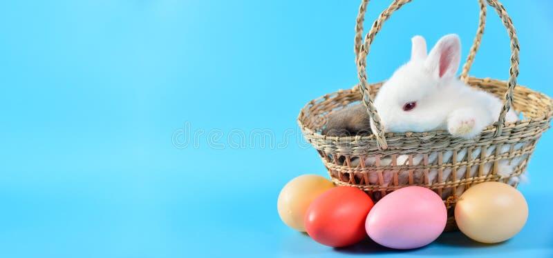 Wenig weißes Kaninchen mit dem roten Auge, das im Korbgeflecht auf blauem Hintergrund mit buntem Ei, Konzept von Ostern-Festival  stockfoto