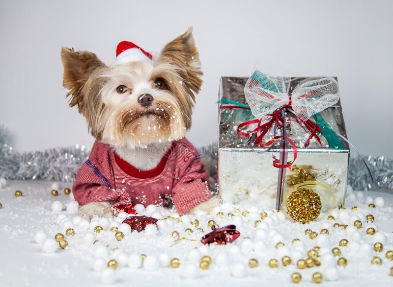 Wenig Welpe feiert neues Jahr lizenzfreies stockfoto