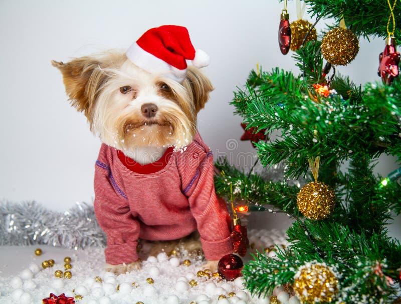 Wenig Welpe feiert neues Jahr lizenzfreies stockbild