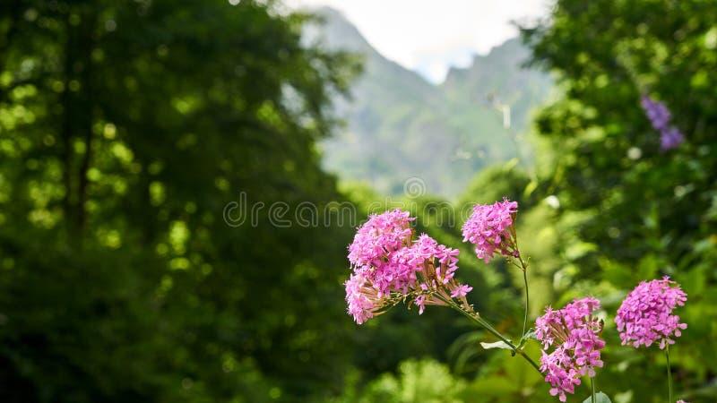 Wenig wildes Rosa-Blume auf Waldhintergrund lizenzfreie stockfotografie