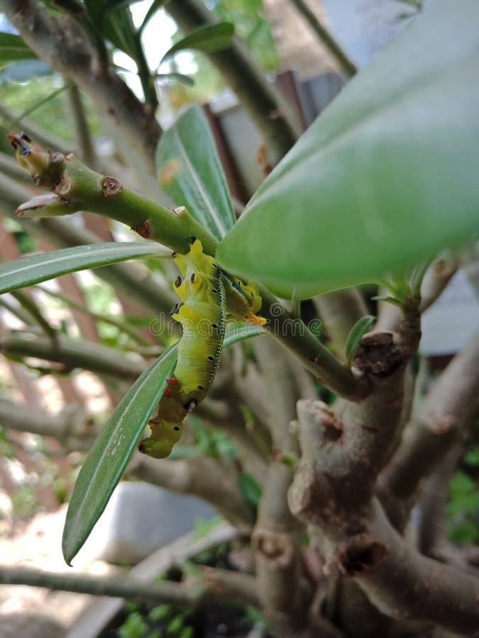 Wenig Wurm auf den Blättern lizenzfreie stockfotografie