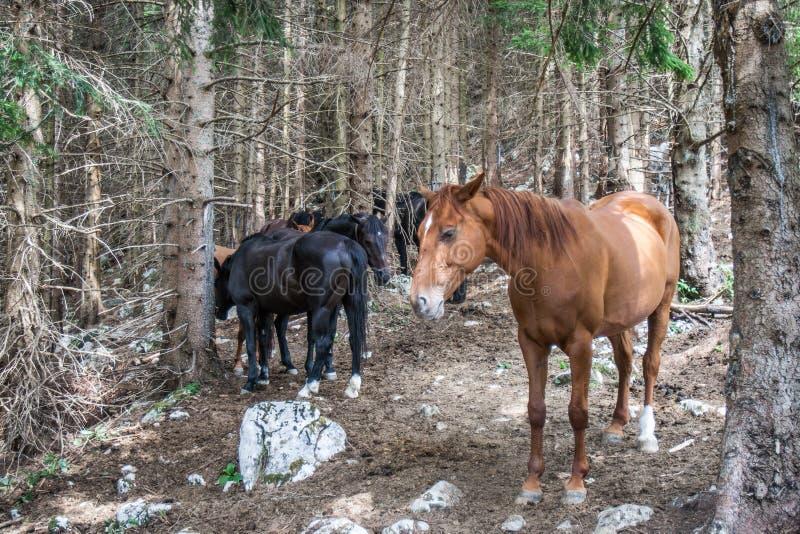 Wenige Pferde in einem Wald lizenzfreies stockbild