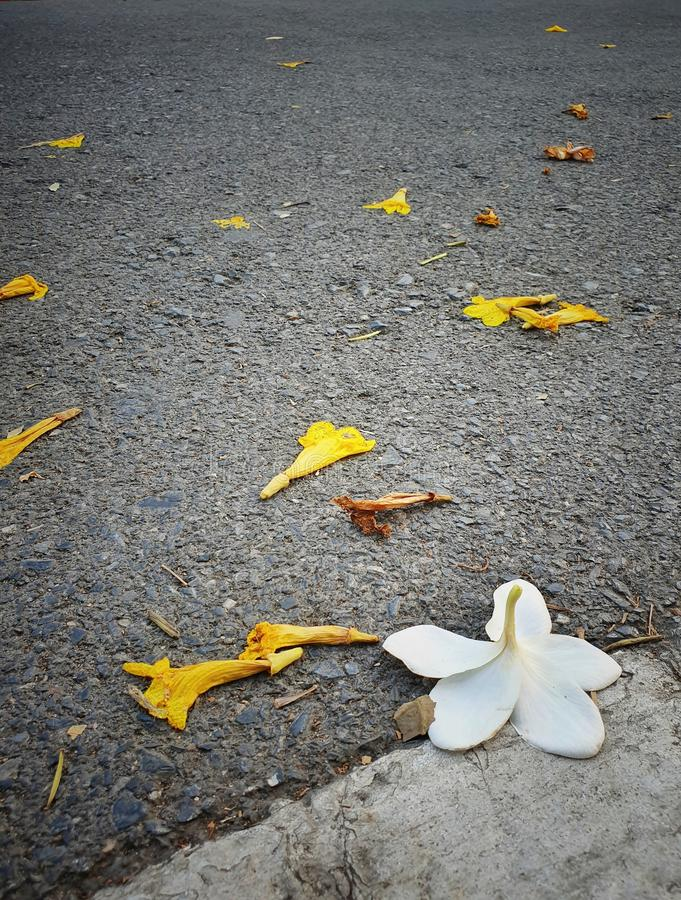 Wenn Blume unten fallen lizenzfreie stockfotografie