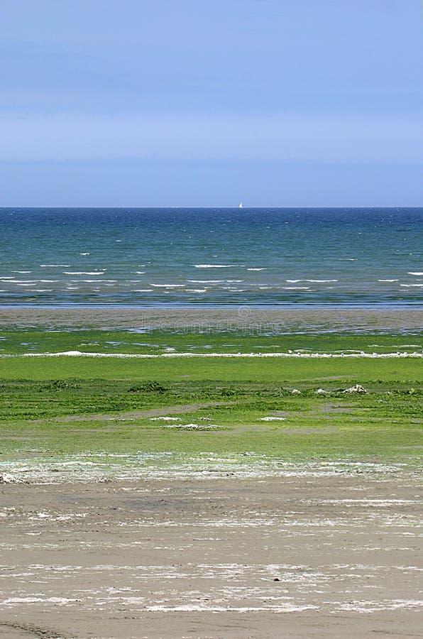 Wenn die Meerespflanze abgedeckt, Sand auf dem Strand von Heiliges Michel-en-Grève (Bretagne) lizenzfreie stockfotos