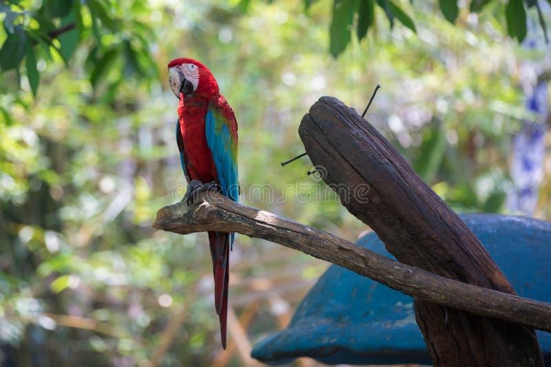 Wenn wir zum Singapur Park reisen, River Safari lizenzfreie stockfotos