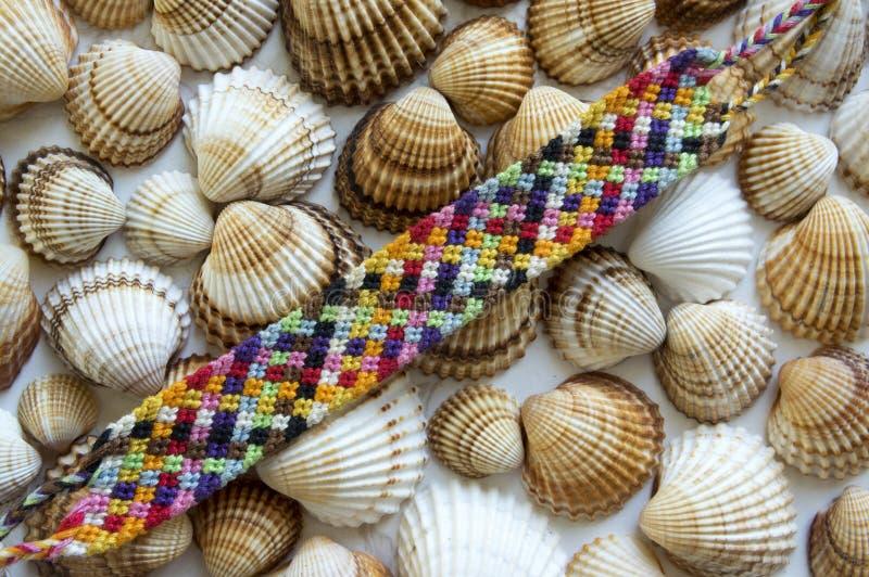 Wenus mussels, spiny cockle łuskają, seashells obrazy royalty free