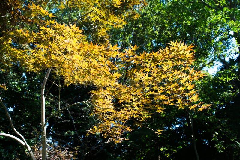Werdener Herbst stockfoto