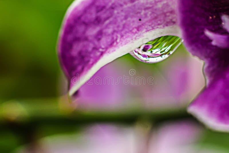 Wereld door een regendruppel stock afbeeldingen