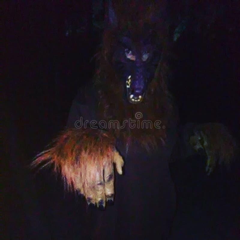 werewolf royalty-vrije stock foto