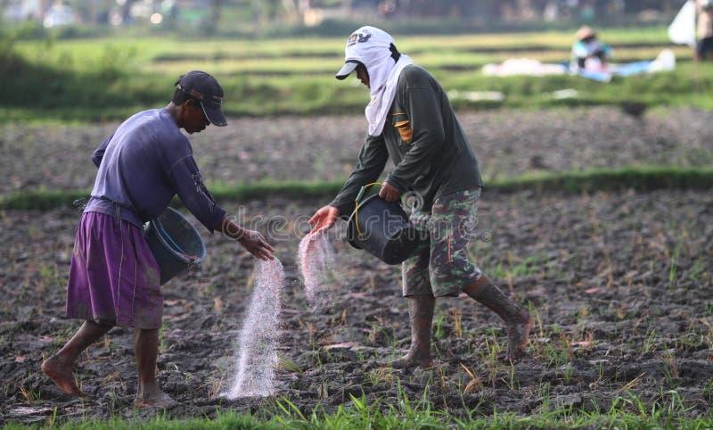 Werfendes Düngemittel des Landwirts lizenzfreie stockfotos