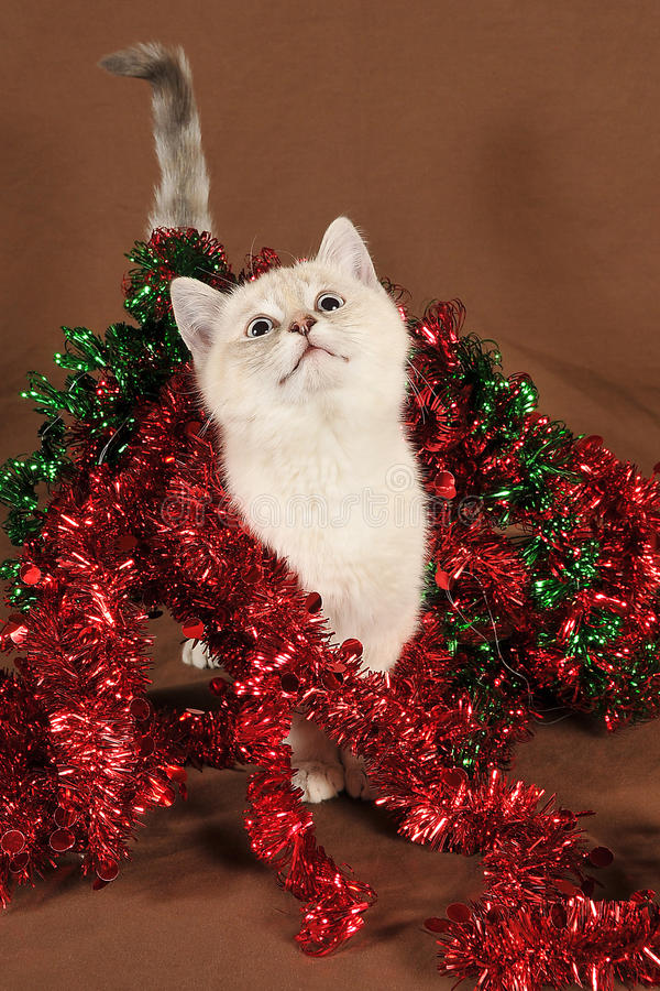 Werkelijk leuk geïntrigeerdu Kerstmiskatje royalty-vrije stock foto