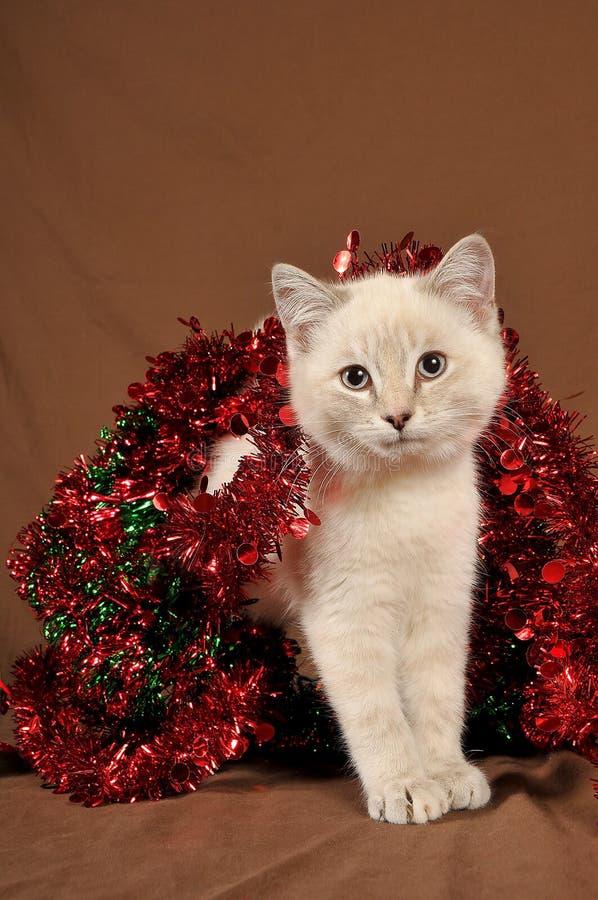 Werkelijk leuk Kerstmiskatje 3 stock fotografie