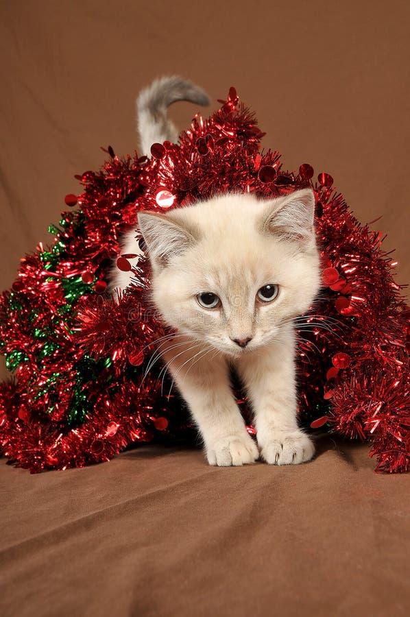 Werkelijk leuk Kerstmiskatje 4 stock afbeelding