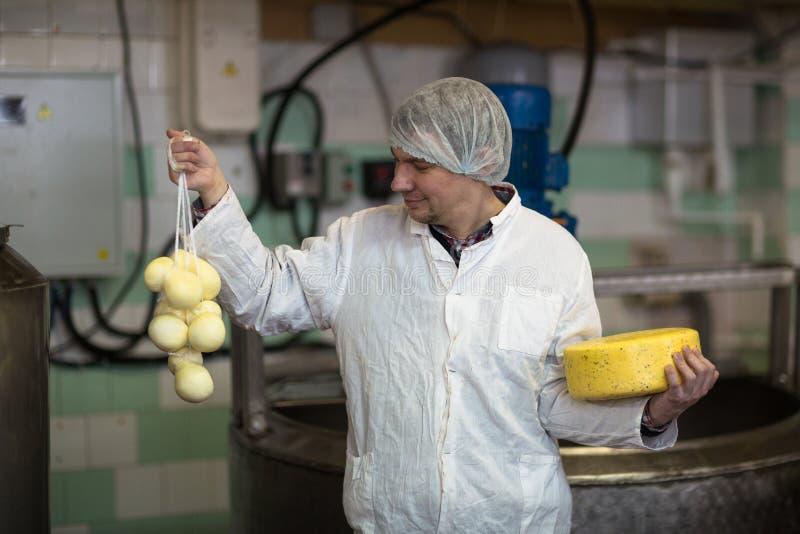 Werkend bij de productie van kaas bij zuivelfabriek, met kazen stock afbeelding