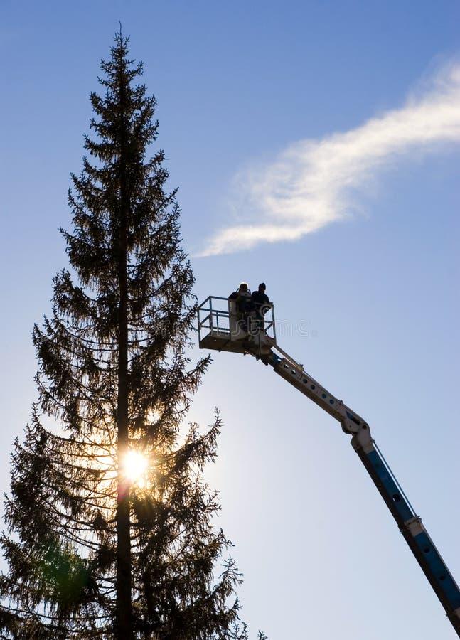 Werklieden op kraan dichtbij boom stock foto's