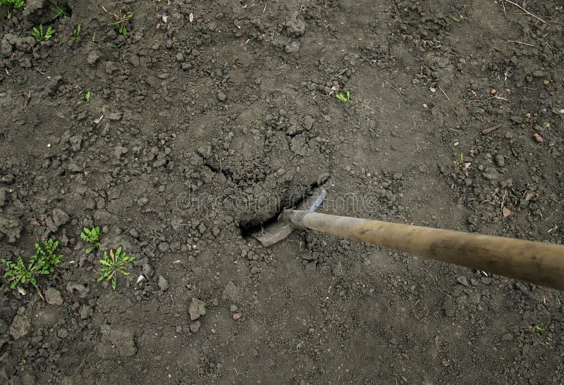 Werkzeug einer alten Schaufel fest im Boden im Garten im s stockbilder