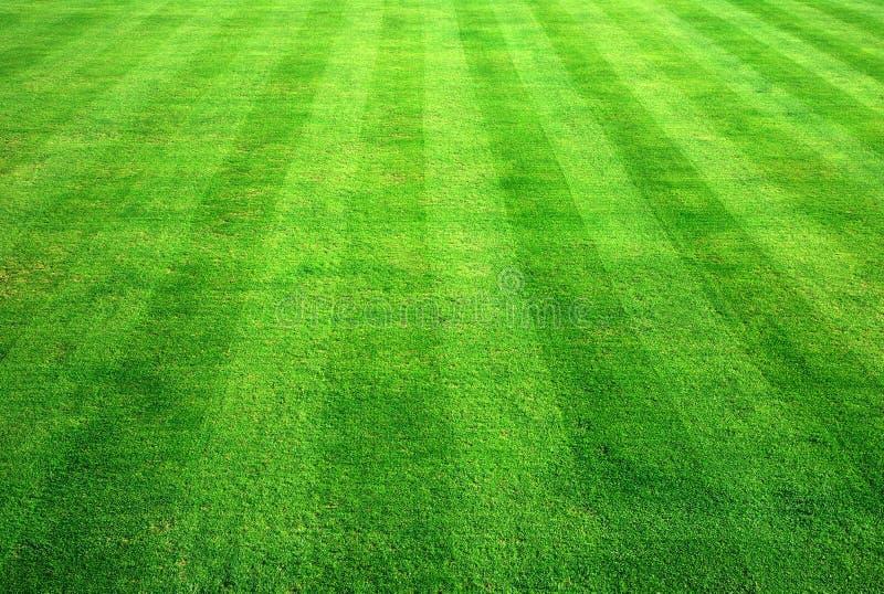 Werpend groen gras. stock fotografie