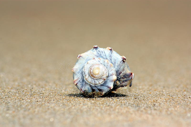 Werveling Shell stock foto's