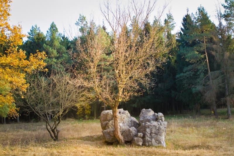 Werwolf, ruïnes van Adolf Hitler ` s vernietigt bestand concreet bunkerhoofdkwartier, brok van beton, de herfstavond, Stryzhavka royalty-vrije stock fotografie