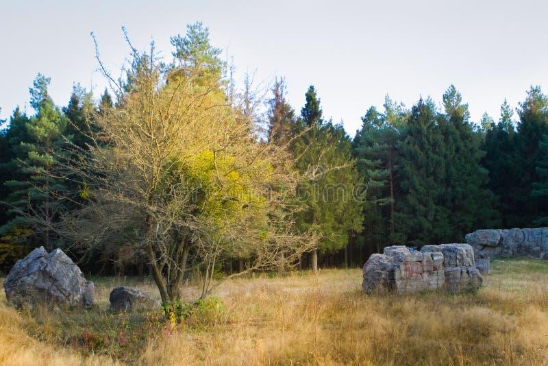 Werwolf, ruiny Adolf Hitler ` s wybuchu odporny betonowy bunkier lokuje, wielcy kawałki beton, Stryzhavka, Ukraina obrazy royalty free