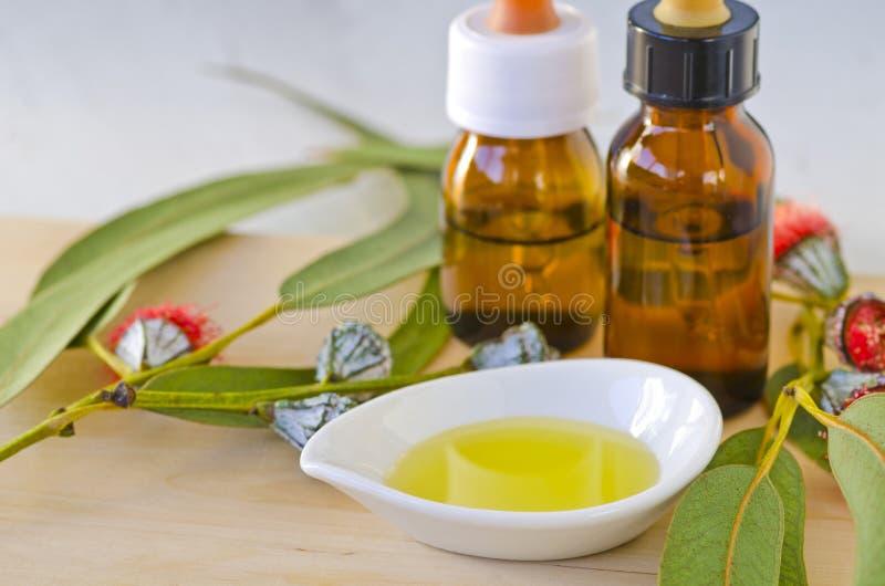 Wesentliches Schmieröl des Eukalyptus stockfoto