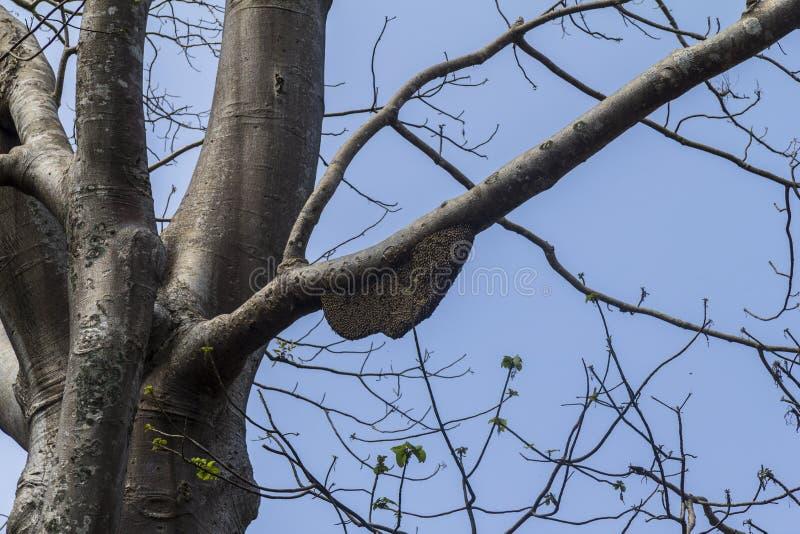 Wesp καθαρό στο δέντρο στοκ φωτογραφία