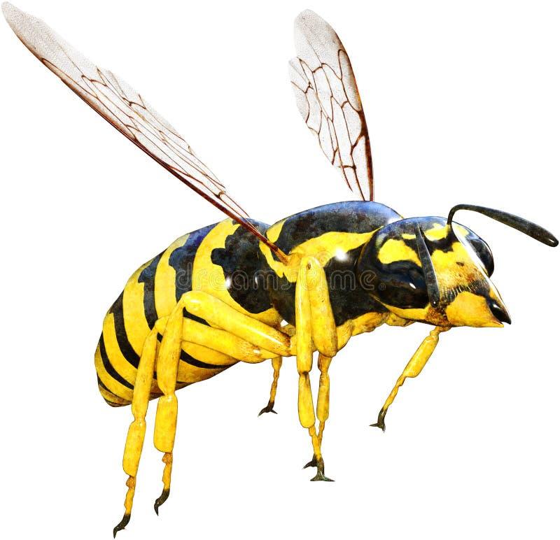 Wespe, Biene, Insekt, Wanze, lokalisiert lizenzfreie stockfotografie