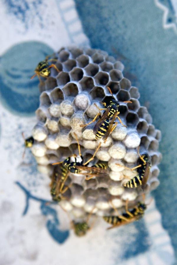 Wespe-Nest stockbilder