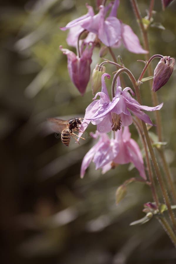 Wespe und Blume lizenzfreie stockbilder