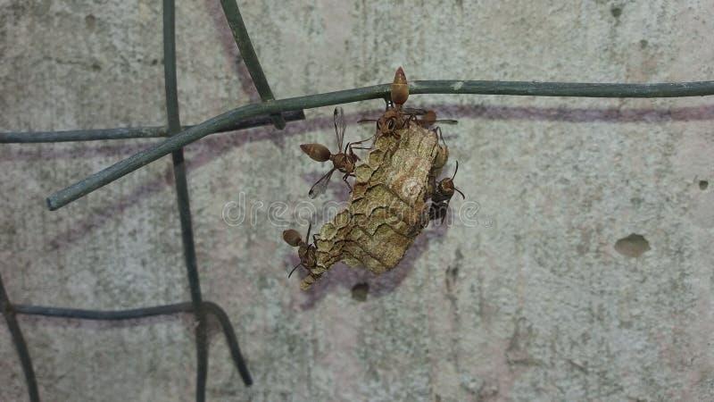 Wespen die hun nest beschermen royalty-vrije stock afbeelding