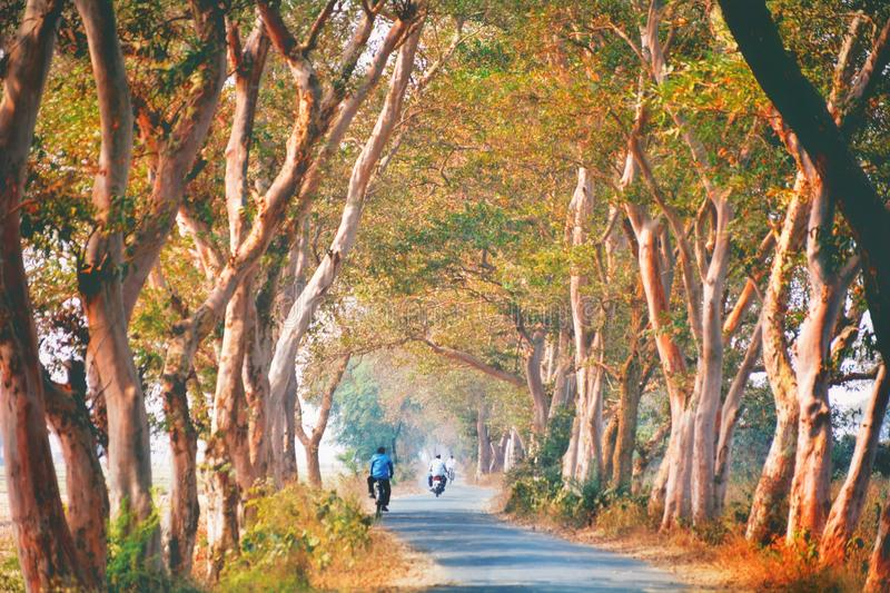 WEST BENGAL, INDIA royalty free stock images