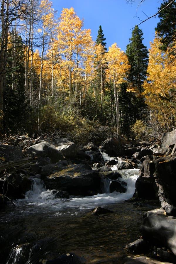 West fork clear creek gunshot rapid in fall stock photography