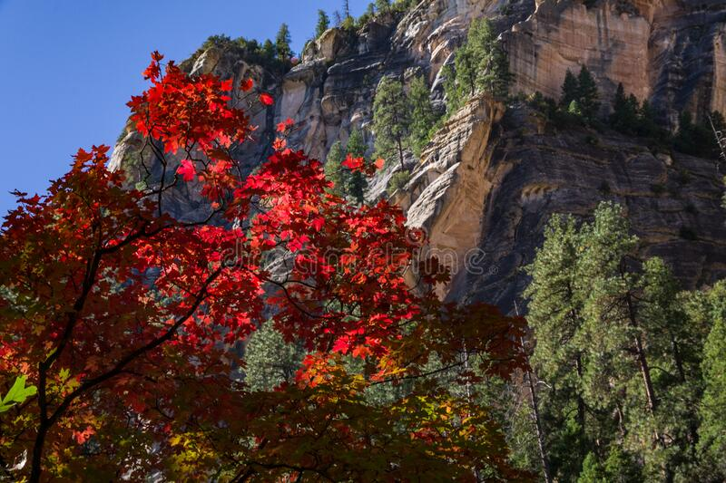 West Fork of Oak Creek Canyon No. 108 stock photo